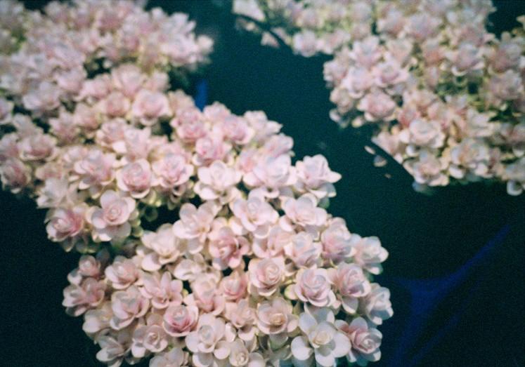 http://weihsinyen.com/files/gimgs/th-15_12_Untitled(Flowery_band)_w.jpg