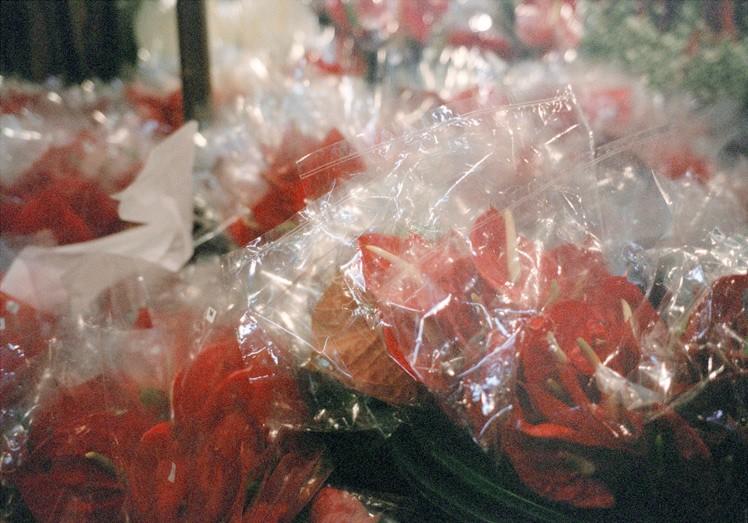 http://weihsinyen.com/files/gimgs/th-15_15_Untitlted(Plastic_flower)_w.jpg